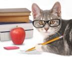 Autoren-Tipp: Was Sie über Selfpublishing wissen sollten – alle Online-Kurse