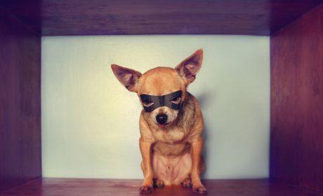 Schreib-Tipp: Underdog, Benachteiligter, Prügelknabe –und Romanheld