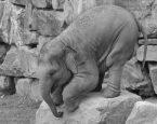 Schreib-Tipp: Richtig umgehen mit dem Elefanten im Raum
